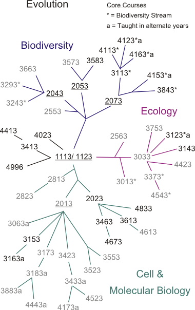 tl_files/sites/biology/Course Phylogeny/cp_evolution.png
