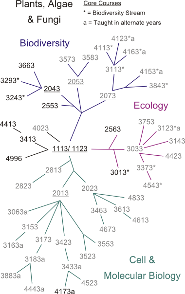 tl_files/sites/biology/Course Phylogeny/cp_plant.png